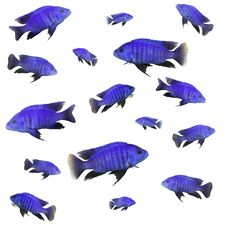 Free Collage With Blue Fish Stock Photo - 1652100