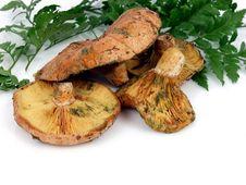 Free Mushrooms Stock Photos - 1653403