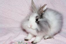 Free The Royal Lion S Rabbit Royalty Free Stock Photo - 1653415