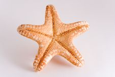 Starfish Isolated On White Royalty Free Stock Images