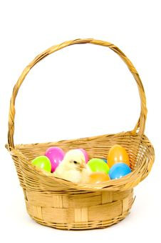 Baby Chick In A Basket With Plastic Easter Eggs Royalty Free Stock Photos