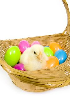 Baby Chick In A Basket With Plastic Easter Eggs Stock Photo