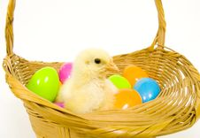 Baby Chick In A Basket With Plastic Easter Eggs Stock Photography