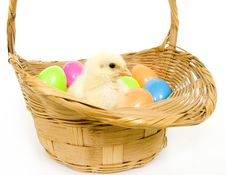 Baby Chick In A Basket With Plastic Easter Eggs Royalty Free Stock Photo