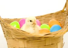 Free Baby Chick In A Basket With Plastic Easter Eggs Royalty Free Stock Image - 1653806