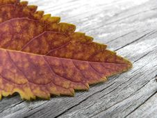 Autumn Orange Stock Image
