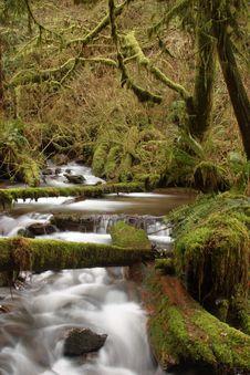 Free Munson Creek Rainforest Stock Photos - 1655013