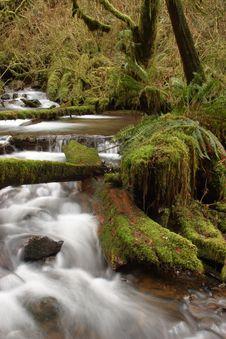 Free Munson Creek Rainforest Stock Images - 1655014