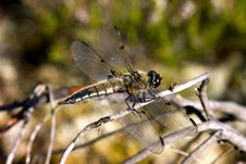 Free Dragonfly Stock Image - 1657351