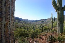 Free Cactus Saguaro Royalty Free Stock Photos - 1659028