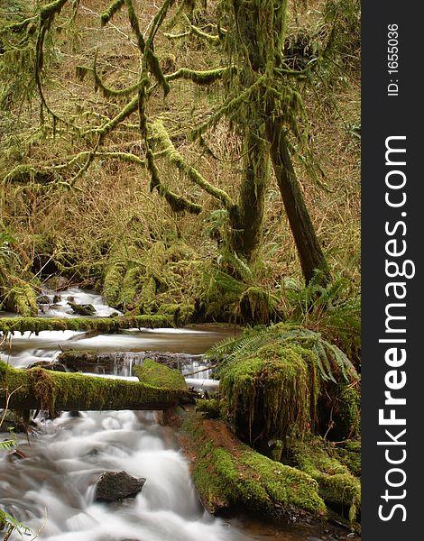 Munson Creek Rainforest