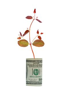 Free Tree  Growing From Dollar Bill Royalty Free Stock Photo - 16501265