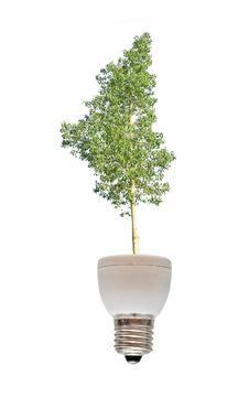 Free Tree Growing From Fluorescent Lamp Royalty Free Stock Images - 16501529
