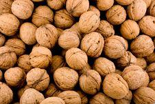 Free Walnut Royalty Free Stock Photo - 16502225