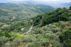 Free Olive Groves On Hills Stock Photography - 16502632