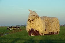 Free Giant Sheep In Afternoon Sun Stock Photos - 16502833