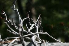 Free Dried Twigs Stock Photography - 16505382