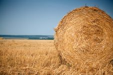 Free Rolls Of Hay Royalty Free Stock Images - 16505739
