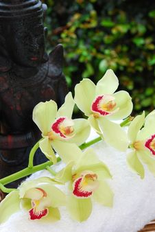 Free Buddha Statue  And Orchids Stock Image - 16505801