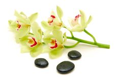 Free Green Orchids With Massage Stones Stock Photography - 16505912