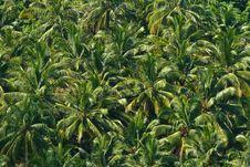 Free Palm Texture Stock Photos - 16506073