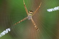 Free Spider. Royalty Free Stock Photos - 16507948