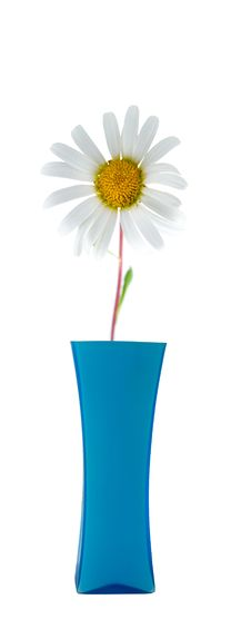Free Flower In A Vase Royalty Free Stock Image - 16508506