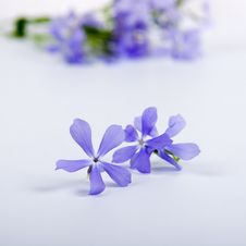 Free Blue Flowers Royalty Free Stock Photos - 16508548