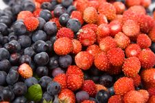Free Wild Strawberries And Blueberries Stock Photography - 16508602