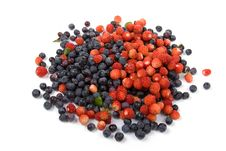Free Wild Strawberries And Blueberries Royalty Free Stock Photography - 16508617
