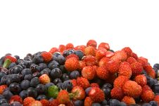 Free Wild Strawberries And Blueberries Royalty Free Stock Photos - 16508618
