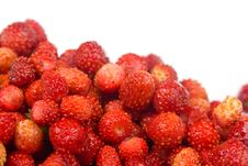 Free Wild Strawberries Stock Photo - 16508670