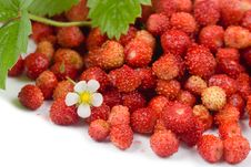 Free Wild Strawberries Stock Photo - 16508700