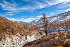 Free Lonely Tree Over Mountain River Stock Image - 16508931