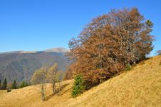 Free Autumn In Mountains. Stock Images - 16508944