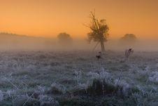 Free Sunrise Royalty Free Stock Photography - 16509767