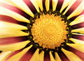 Free Yellow And Red Flower Background Royalty Free Stock Photography - 16511707