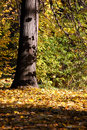 Free Autumn In Forest Stock Photos - 16515253