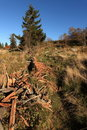 Free Deforestation Royalty Free Stock Image - 16515296