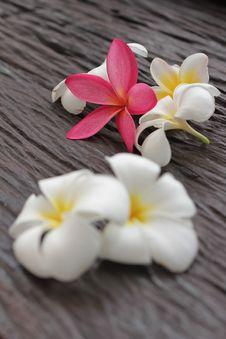 Free Flower Leelavadee Plumeria Royalty Free Stock Image - 16510636