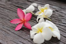 Flower Leelavadee Plumeria Stock Images