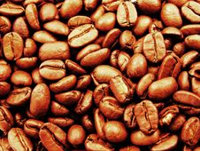 Free Close Up Of Coffee Beans Stock Images - 16510844