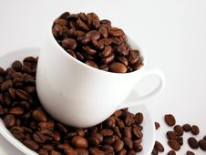 Free Fresh Coffee Beans In White Cup Stock Photo - 16510880
