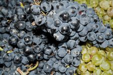 Free Grape Stock Photography - 16515082