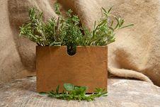 Free Healing Herbs Stock Photo - 16515090