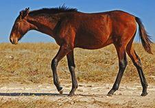 Free Horse Stock Photography - 16516032