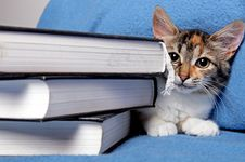 Free Cute Kitten With A Books Royalty Free Stock Photos - 16516218