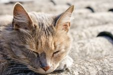 Free Cat Sleeping On A Roof Stock Photo - 16516300
