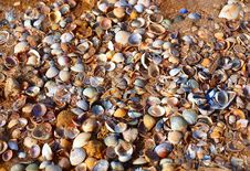A Lot Of Seashells On A Sand Beach Stock Image