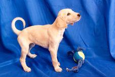 Free Standing Saluki Pup Stock Images - 16519274